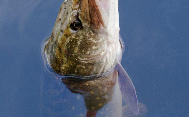 Carte de pêche Angers Trélazé